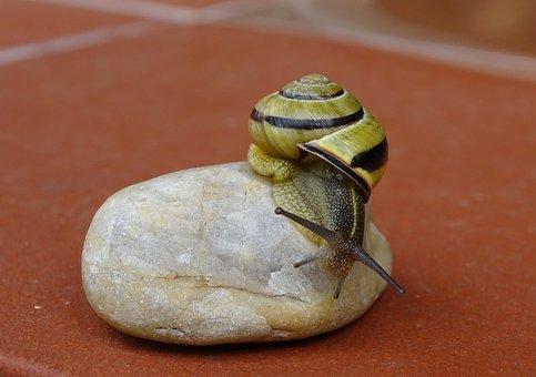 Snail, Shellfish, Garden Snail, View, Housing, Mollusk