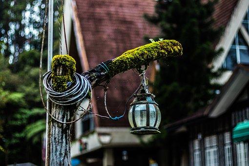 Outdoors, Travel, Lamp, Tree, Nature, Garden, Light