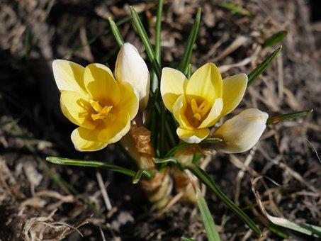 Nature, Flora, Flowers, Season, Color, The Buds, Macro