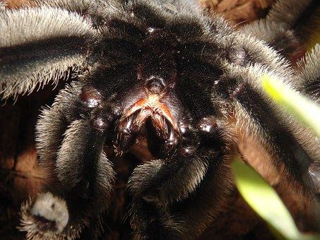 Invertebrates, Insect, Nature, Animals, Spider