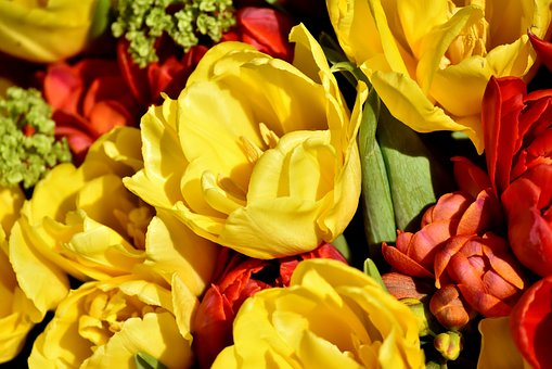 Flowers, Spring, Colorful, Nature, Plant, Yellow Flower