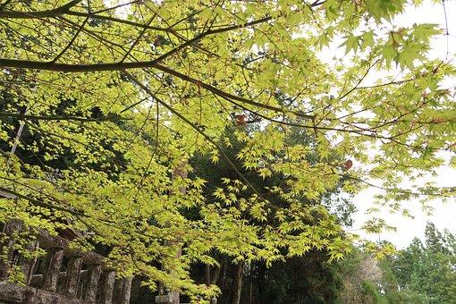 Wood, Natural, Leaf, Landscape, Outdoors, Lush