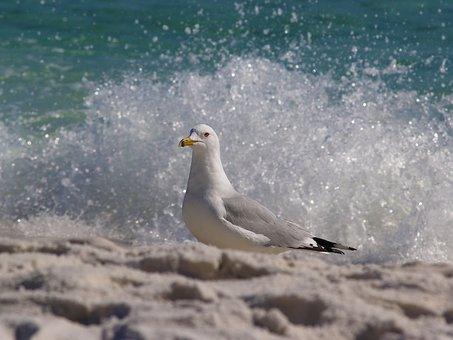 Bird, Nature, Sea, Outdoors, Water, Beach, Seashore