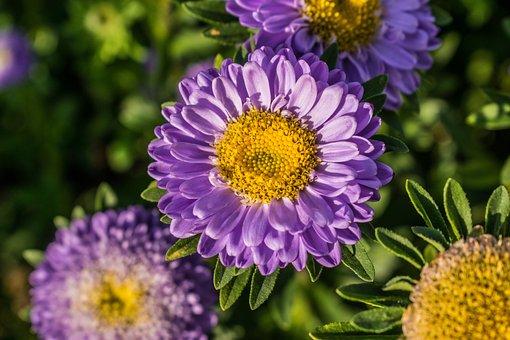Nature, Plant, Summer, Floral, Garden, Leaf, Petal