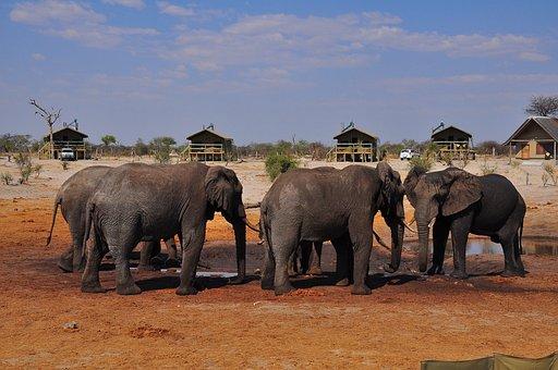 Elephant, Mammal, Travel, Wildlife, Safari, Animal