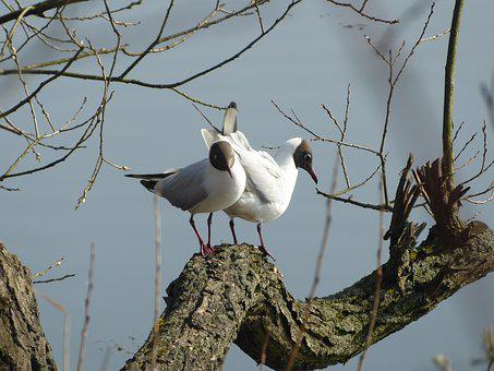 Birds, Nature, Animals, Beak, Seagull
