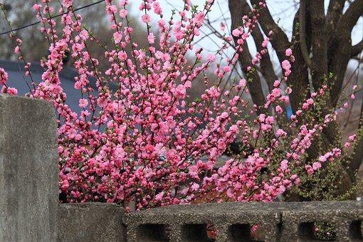 Flowers, Wood, Quarter, Plants, Season, Garden