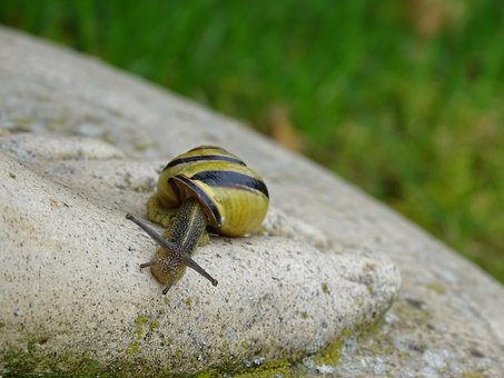 Snail, Shell, View, Reptile, Slimy, Crawl