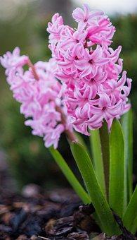 Nature, Flower, Plant, Petal, Leaf, Spring Awakening