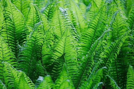 Leaf, Plant, Nature, Fern, Growth, Summer, Lush