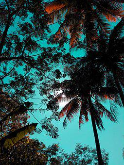 Palm, Nature, Tree, Tropical