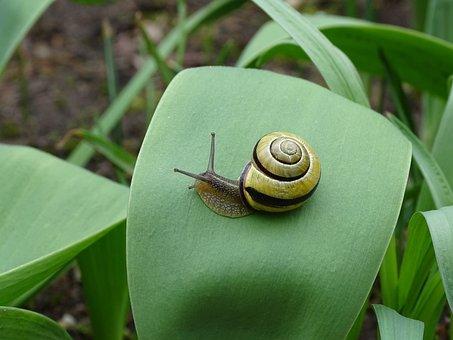 Snail, Shellfish, Garden Snail, View, Casing, Mollusk