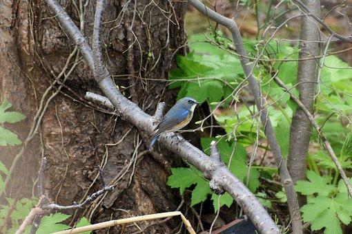 Animal, Forest, Wood, Branch, Leaf, Bird, Wild Birds
