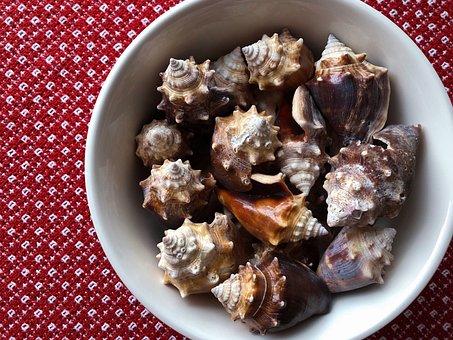 Conch, Shells, Seashells, Nature, Sea, Aquatic