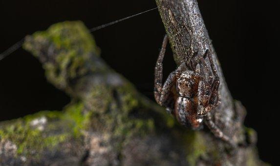 Living Nature, Animals, Nature, Arachnids, Spider