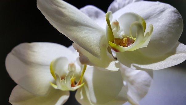 Flower, Nature, Plant, Petal, Beautiful, Flowering