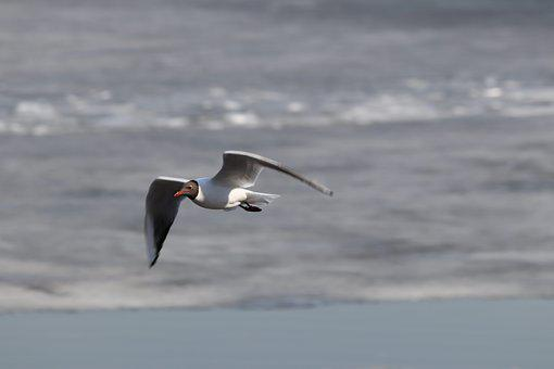 Bird, Water, Sea, Nature, Living Nature, Seagull, Beach