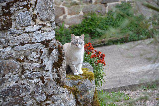 Cat, Cat Blue Eyes, Cat In The Nature, Outdoor, Animal