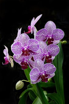 Nature, Flower, Tropical, Flora, Exotic, Orchid