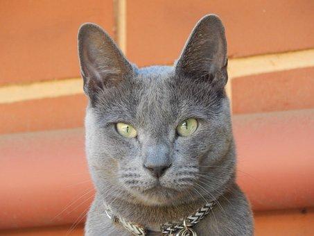 Portrait, Animal, Cute, Cat, Pet, Fur, Eye, Grey