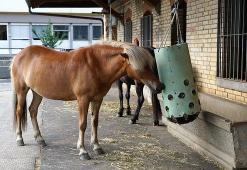 Mammal, Farm, Animal, Graze, Horse, Cavalry, Grass