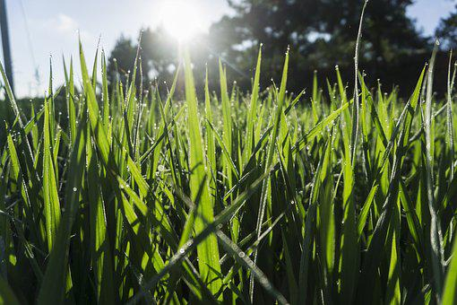 Kinds Of Food, Field, Plant, Lawn, Farm, Backlighting