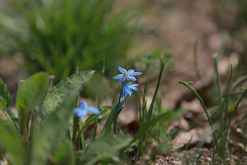 Nature, Plants, Flowers, Leaf, Garden, Flower Garden