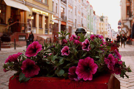 Flower, No One, Street, Megalopolis, House