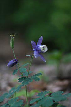 Nature, Plants, Flowers, Leaf, Outdoors, Vivid