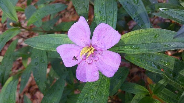 Nature, Leaf, Flora, Flower, Summer, Garden, Closeup