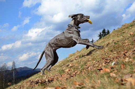 Great Dane, Run To The Hills