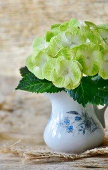 Hydrangeas, Flowers, Yellow, Green, Flower, Garden