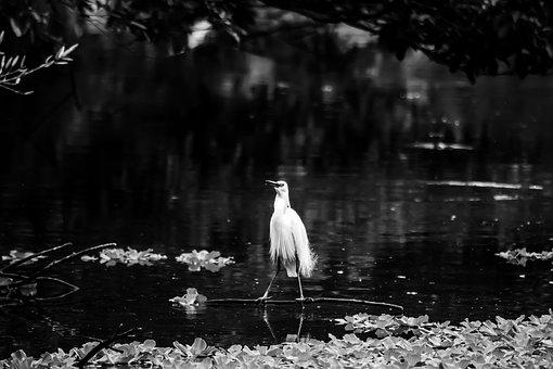 Water, Bird, Monochrome, Nature, Lake, Outdoors, River