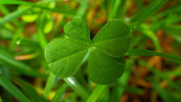 Leaf Plants, Plant, Nature, Garden, Environment, Luck