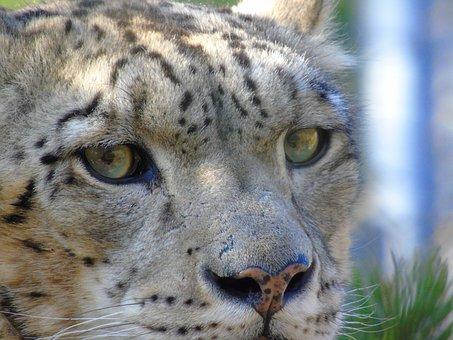 Wildlife, Cat, Mammal, Animal, Nature, Carnivore