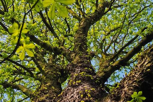 Tree, Nature, Wood, Leaves, Landscape, Forest, Mood