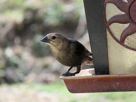 Bird, Bird Feeder, Wildlife, Nature, Animal, Feeder