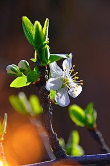 Wood, Flower, Branch, Nature, Plant, Blooming, Garden