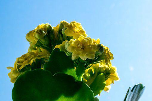 Nature, Flower, Plant, Leaf, Foliage, Floral, Yellow