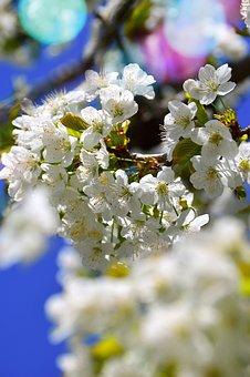 Flower, Plant, Nature, Wood, Branch, Leaf Plants, Petal