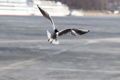 Bird, Winter, Water, Nature, Living Nature, Seagull