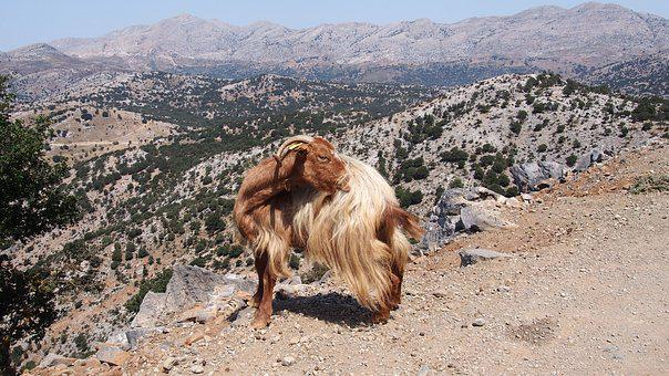 Nature, Travel, Dry, Animals, Goat, Crete, Greece