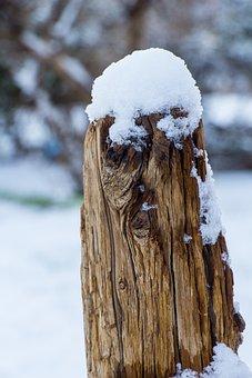 Winter, Tree, Snow, Nature, Wood, Frost, Frozen, Season