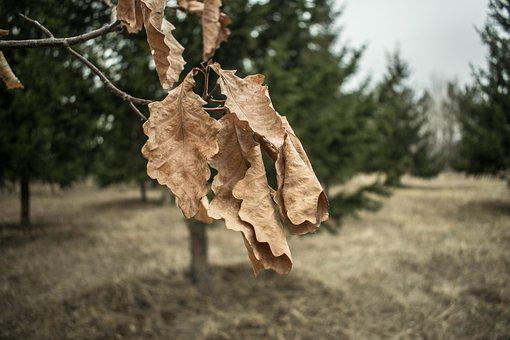 Nature, Tree, Outdoors, Wood, No One, Sheet, Plant