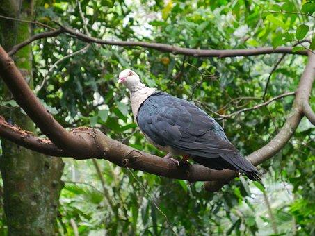 Nature, Tree, Bird, Outdoors, Wildlife, Avian