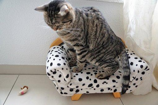 Animal, Domestic, Cute, Pet, Sit, Small, Mammal, Cat