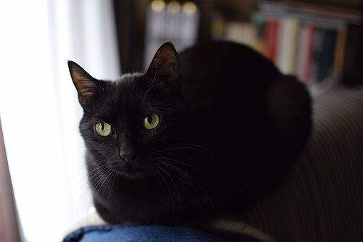 Cat, Portrait, Nice, Pet, Animalia, Kitten, Fur