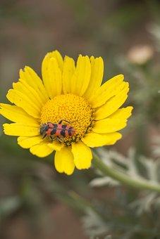 Nature, Flora, Flower, Summer, Beautiful, Spring, Plant