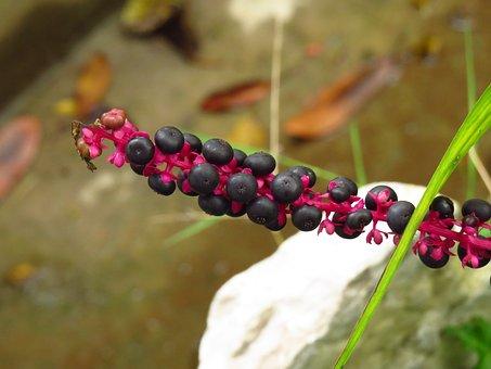 Nature, Fruit, Plant, Berries, Garden, Red, Healthy