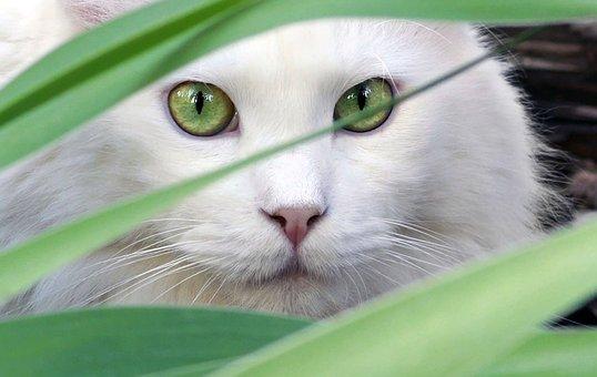 Portrait, Nature, Animal, Cat, Beautiful, Pet, Mammal